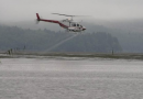 Why Does Gov. Inslee permit spraying of carcinogenic pesticides on Salish Sea eelgrass beds?